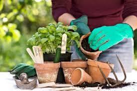 gyógynövénytermesztéshez télikerttervezés