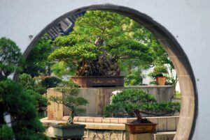 télikertépítés bonsai