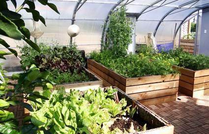 zöldségtermesztés a télikertben - növények