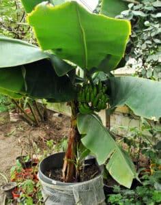Beépített terasz banán télen