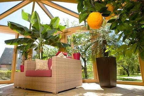 Dísznövények, szobanövények a télikertben