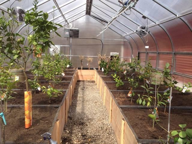 télikert, üvegház fűszer termesztés