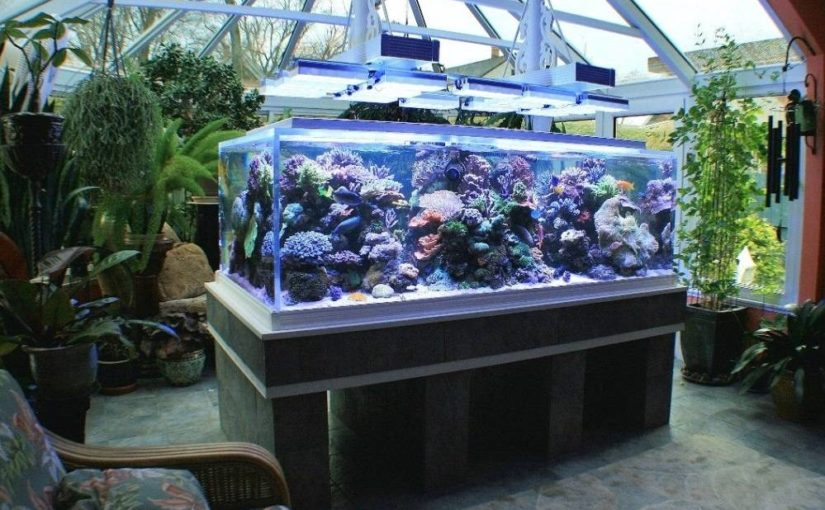 Akvárium és terrárium a télikertben