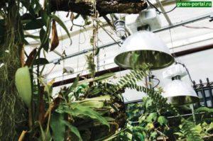 Növény lámpa