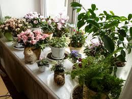 Terasz és növénykert