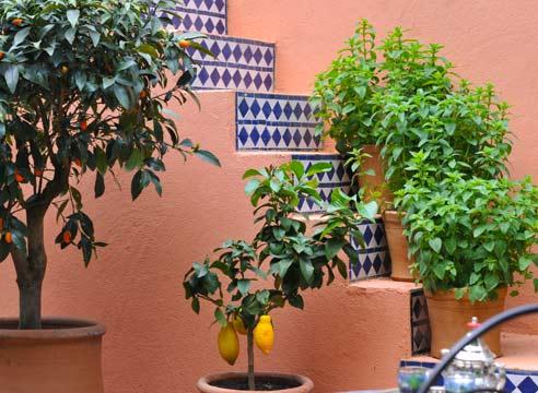 Beépített terasz és télikert gyümölcsei