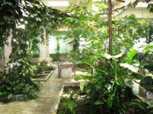 Télikert trópusi növényekkel.